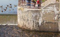 pymatuning spillway photo